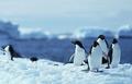0111-M级-议题分析-全球气候保护
