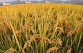 0111-M级-议题分析-全球粮食安全